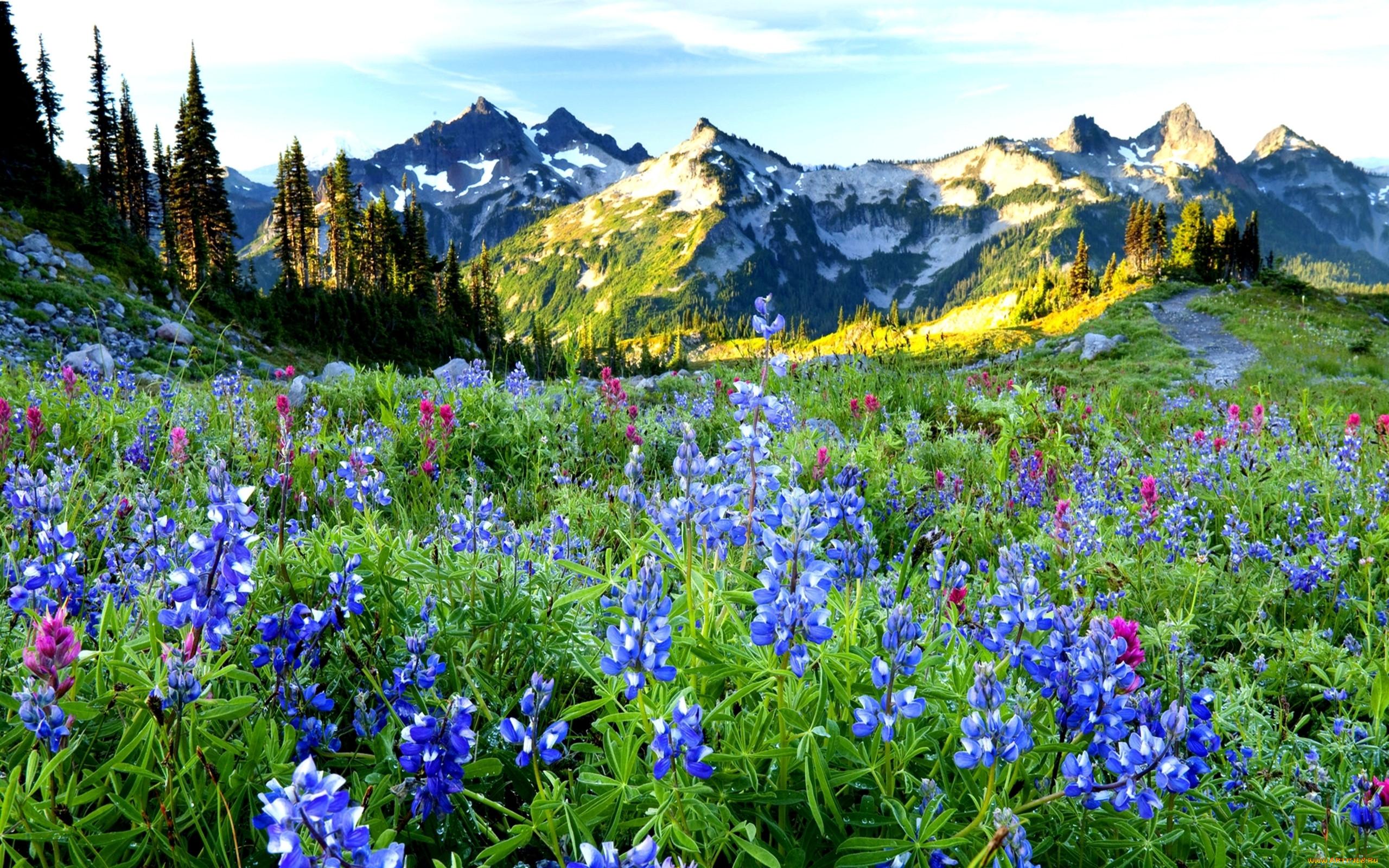 александрович фото весенних горных пейзажей обращаться